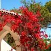 Ibiza Kosta Services - Mantenimiento chalets