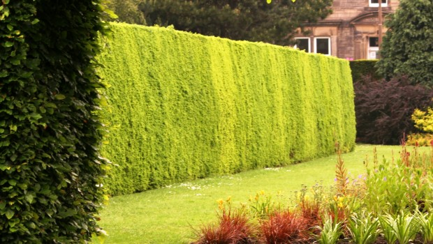 Colocaci n de vallas de madera brezo seto etc - Setos de jardin ...