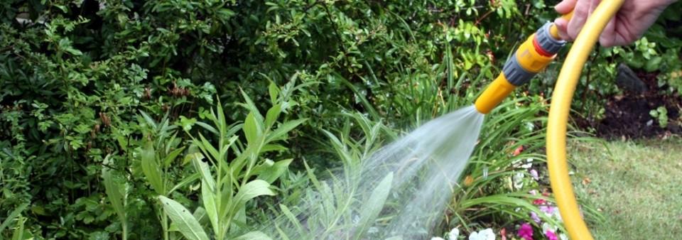 Mantenimiento de jardines - Ibiza Kosta Services